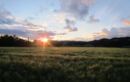 Illustrasjonsfoto: Kornåker på Melhus.