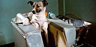 Laika var ein tre år gamal tispe av blandingsrase som blei plukka opp frå gata i Moskva. Ho blei første hund i bane rundt Jorda – men prisen ho betalte var høg.