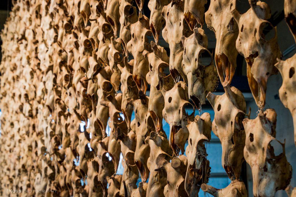 Dei 400 reinsdyrhovuda på kunstfestivalen «Documenta» i Kassel i Tyskland. Foto: !Koss/Flickr/CC BY-ND 2.0