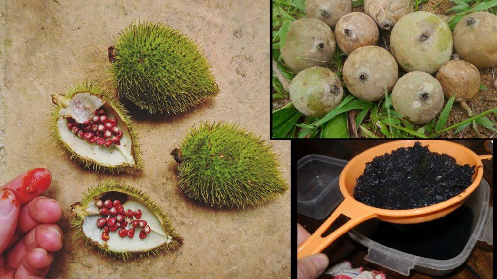 Det er vanleg i Amazonas å bruke plantepigment til kroppsmåling. Her ser de achiote og huito. Achiote er ein raudfarge og huito er ei frukt som skiftar farge til blåsvart når ho eksponerast for luft.
